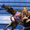 Dogs Will Fly This Weekend In Edgewater