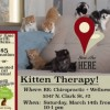 Kitten Therapy Event to Benefit Edgewater's Tree House Humane Society